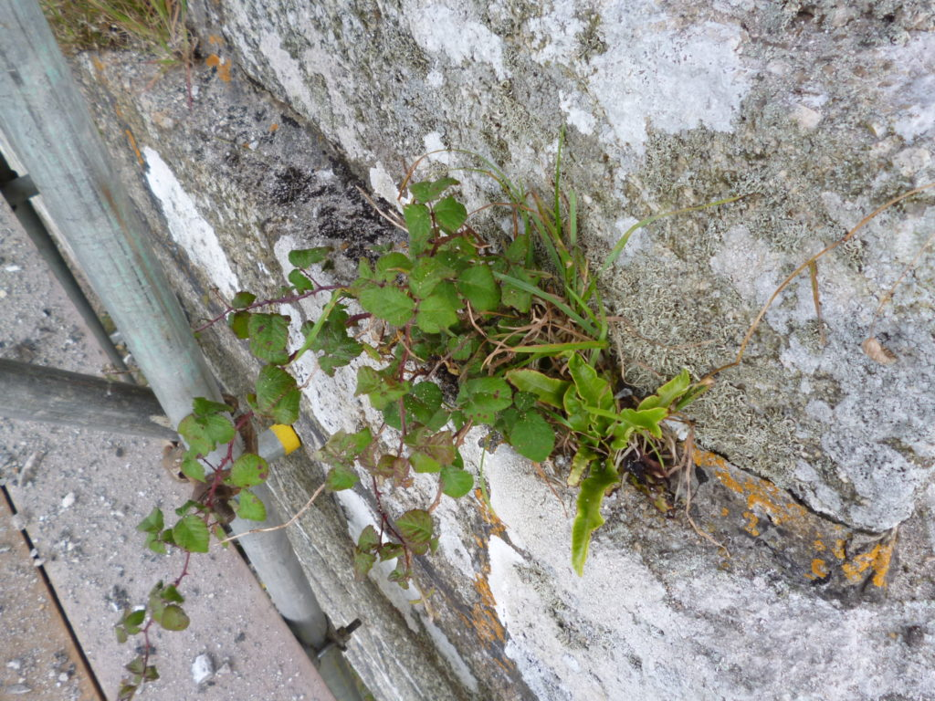 Vegetation was growing in the cracks